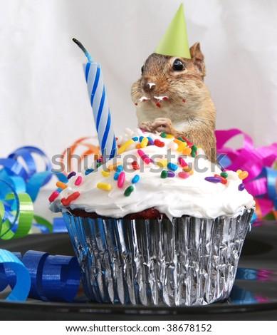 little chipmunk celebrates his birthday