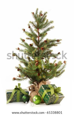 Little christmas tree with gifts on white background