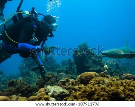LITTLE CORN ISLAND, NICARAGUA - APRIL 5: Scuba diver approaches nurse shark on coral reef on April 5, 2012 in Little Corn Island, Nicaragua. Scuba divers make important contributions to economy. - stock photo