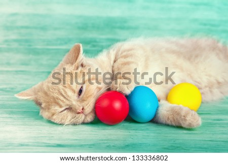 Little cream cat sleeping near colored easter eggs