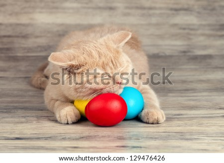 Little cream cat sleeping on colored easter eggs