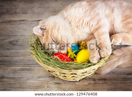 Little cream cat sleeping on the basket with colored eggs - stock photo