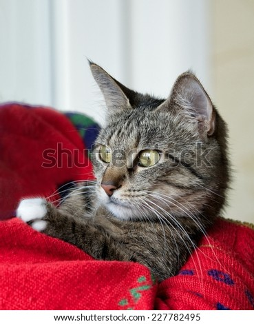 Little curious cat, only head crop, cat in blurry background with space for advertising, cat head, cute funny cat close up, domestic cat, funny cat with wide open eyes