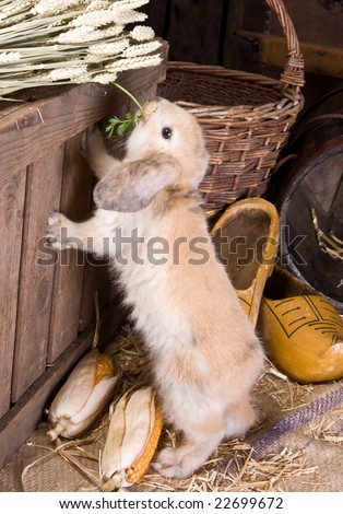 Little curious easter rabbit finding food on a farm - stock photo
