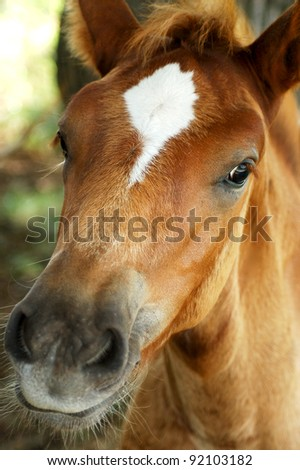 Little curious foal looks into the camera