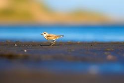 Little cute bird. Blue, green, brown nature background.