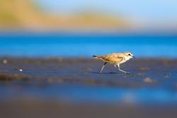 Little cute bird is walking. Blue, brown, green nature background.