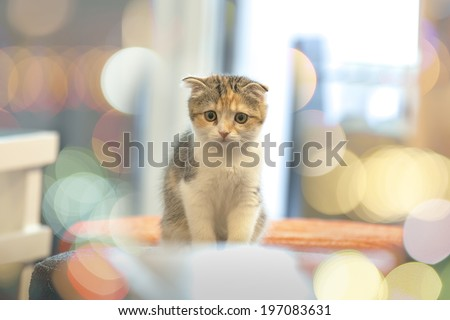 Little Cute Cat with Bokeh Background
