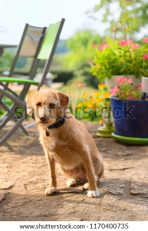 Little cute cross breed dog outdoor in the garden