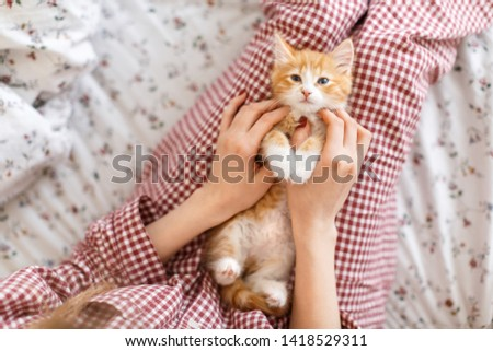 Little cute ginger kitty with blue eyes enjoys stroking. Caucasian girl's hand stroked the little red and white color fluffy kitten. View from the top. Selective focus. Domestic animals concept.