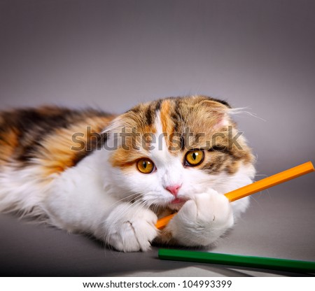 little cute kitten playing with colorful pens