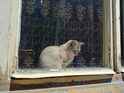 Little cute kitten sitting behind the window