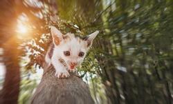 Little cute white  kitten climb up on outdoor large tree,