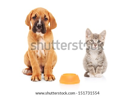 Little dog and cat looking at camera isolated on white background