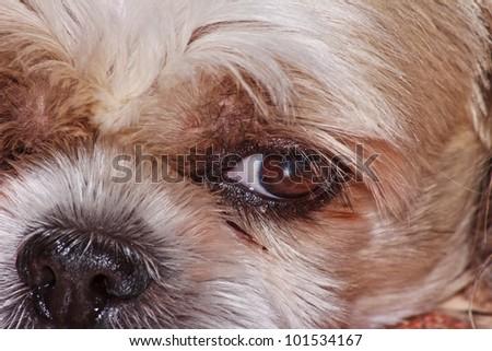 Little dog face close up