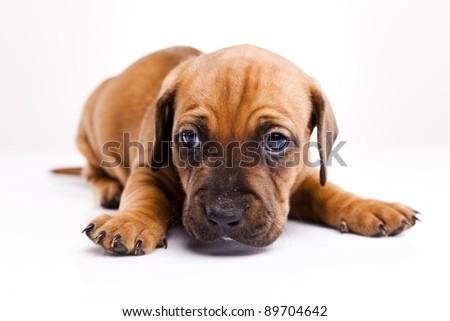 Little dog on white background