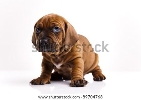Little dog on white background - stock photo