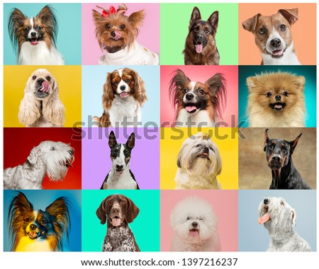 Little dogs are posing and looking in the camera. Cute doggies or pets are happy. The different purebred puppies. Creative collage isolated on multicolored studio background. Front view. #1397216237