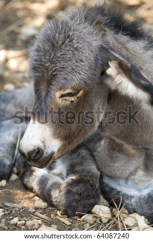 Little donkey in a field with stones - stock photo