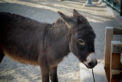 Little donkey living in the zoo