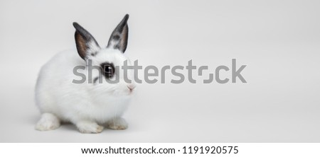 Little dwarf white rabbit sitting on white background