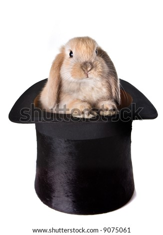 Little easter bunny as a surprise in a top hat