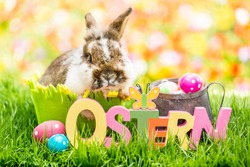 Little easter bunny in tulip meadow in spring with german rustic word-ostern-. Colorful flowers in spring. Postcard and background.
