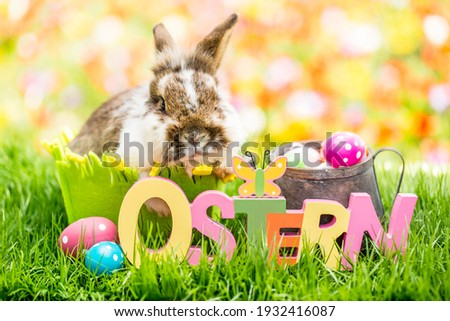 Little easter bunny in tulip meadow in spring with german rustic word-ostern-. Colorful flowers in spring. Postcard and background. Foto stock ©