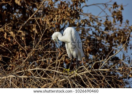little Egret in sulaibikhat bay - kuwait #1026690460