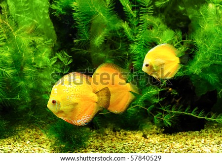 Little fishes in aquarium