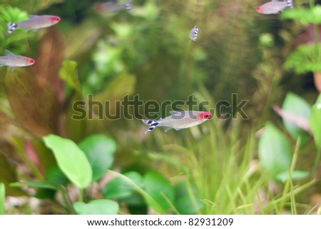 Little fishes in fishtank with plants