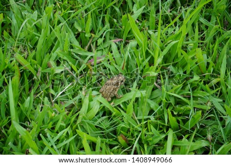little frog in green grass sitting background texture closeup nature fresh nature natural park spring summer
