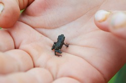little frog in the palm of your hand.