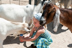Little funny girl feeding and taking care of animals on farm: cows and goats