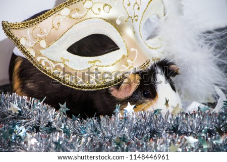 little funny guinea pig with gold venetian mask #1148446961