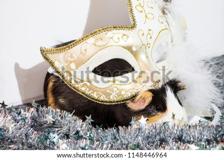 little funny guinea pig with gold venetian mask #1148446964