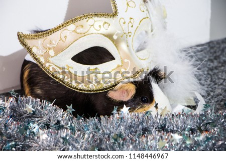 little funny guinea pig with gold venetian mask #1148446967