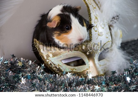 little funny guinea pig with gold venetian mask #1148446970