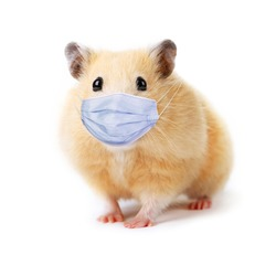 Little funny hamster in medical mask isolated on white background