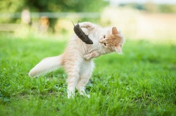 Little funny kitten playing with a caught mouse