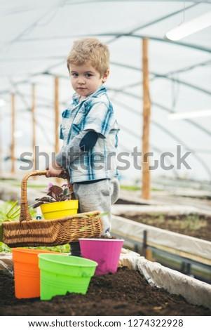 little gardener. little gardener in greenhouse. little gardener work in orangery. little gardener holding flower basket. taking good care of his plants