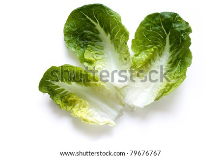 little gem lettuce leaves isolated on white background