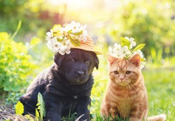 Little ginger kitten crowned chaplet from the cherry flowers. Little puppy in straw hat with cherry flowers. Portrait of the kitten and puppy sitting on the grass in spring on a sunny day