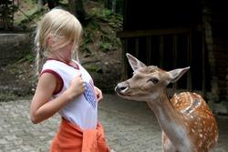Little girl and deer. Zoo