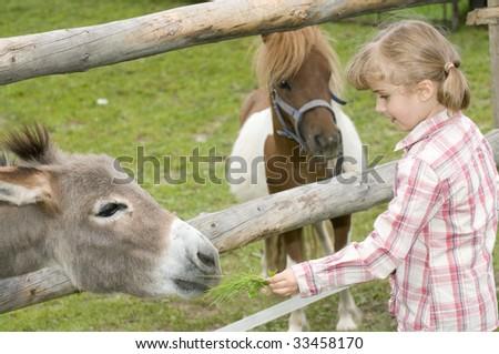 Little girl feeding donkey