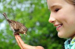 Little girl feeding sparrow