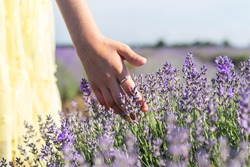 Little girl hands are touching bloomed purple lavender flower. She is wearing yellow dress, walking in a lavender field before sunset. Selective focus.