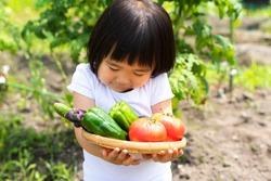 Little girl harvesting vegetables in the vegetable garden