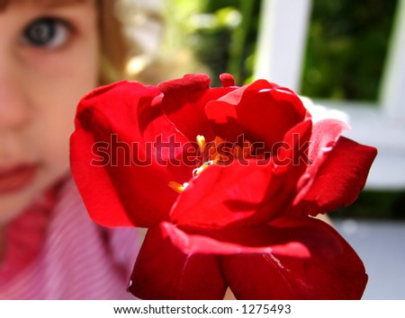Little girl holding a rose with face blurred in background