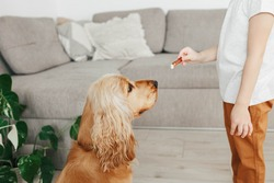 Little girl holding dog snack food and training her dog to sit at home